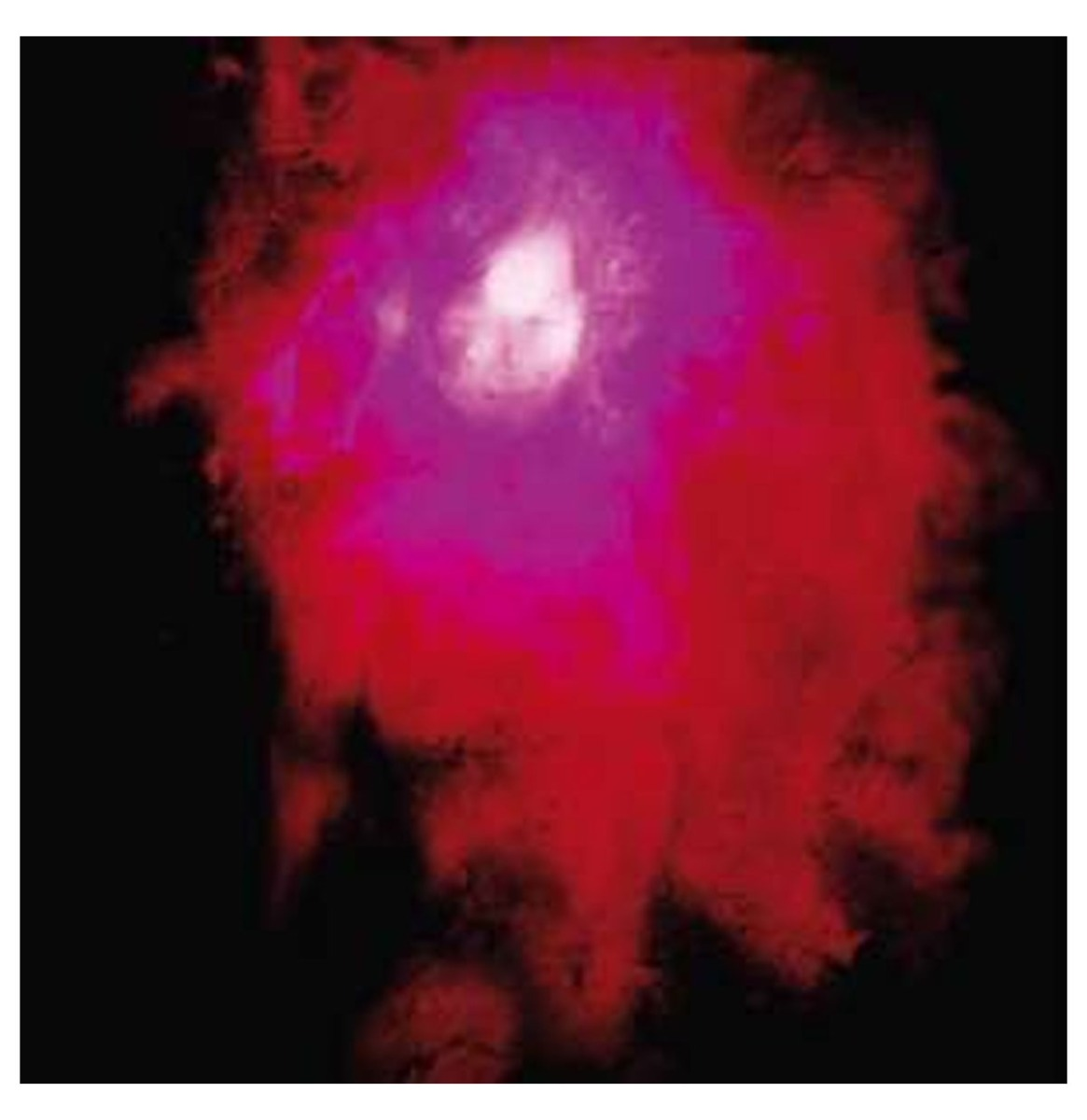 Porcupine Tree - Up The Downstair 2-LP